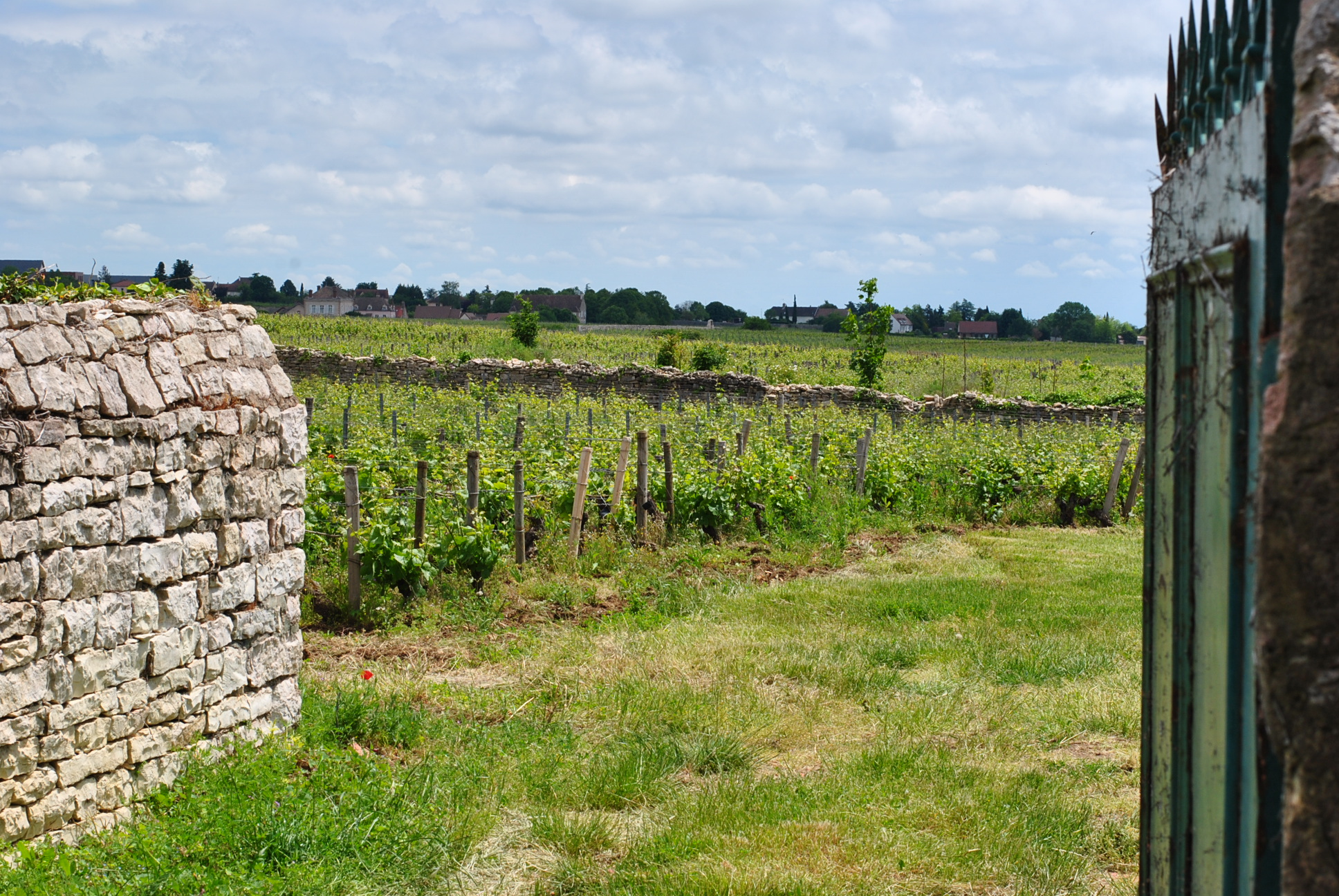 Collection Tramier | Vignes